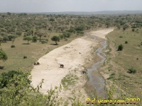 Tarangire river from Safari Lodge