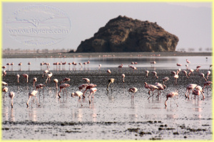 flamingoes Lake Natron
